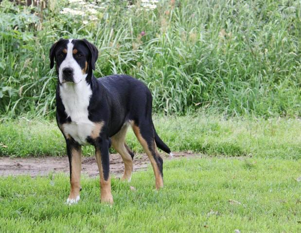http://zennen-dog.com/Foto/PometG-K/3-640.JPG