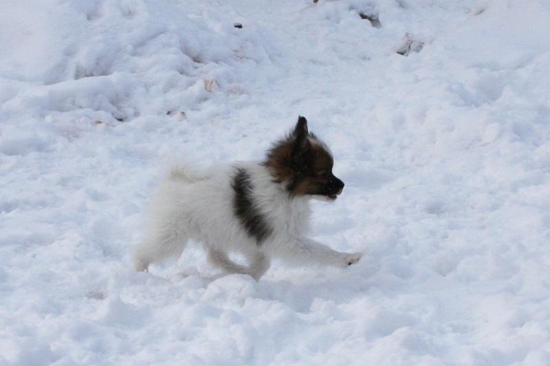 http://zennen-dog.com/Foto/PometP-B/21.JPG