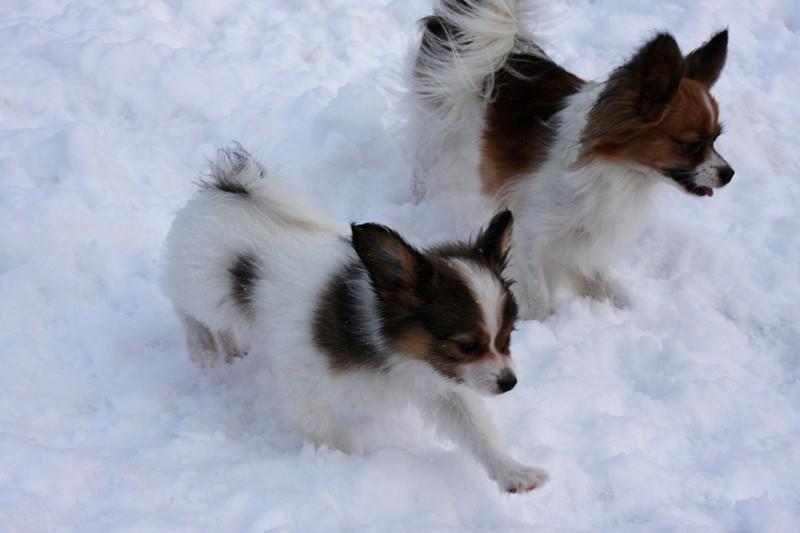 http://zennen-dog.com/Foto/PometP-B/7.JPG